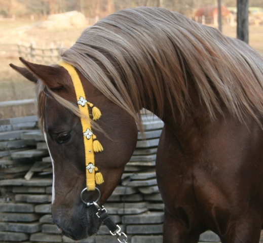 Ranč cindyum -arabian horses